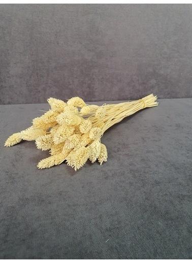 Kuru Çiçek Deposu Kuru Çiçek Kuş Otu 35-40 Cm  Koyu Mor  Beyaz